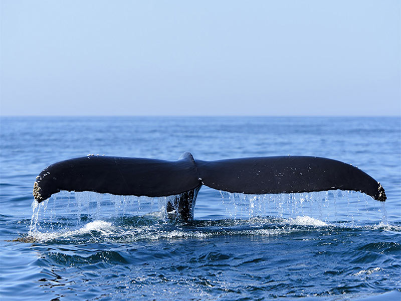 Whale Watching in Cape Town is Great
