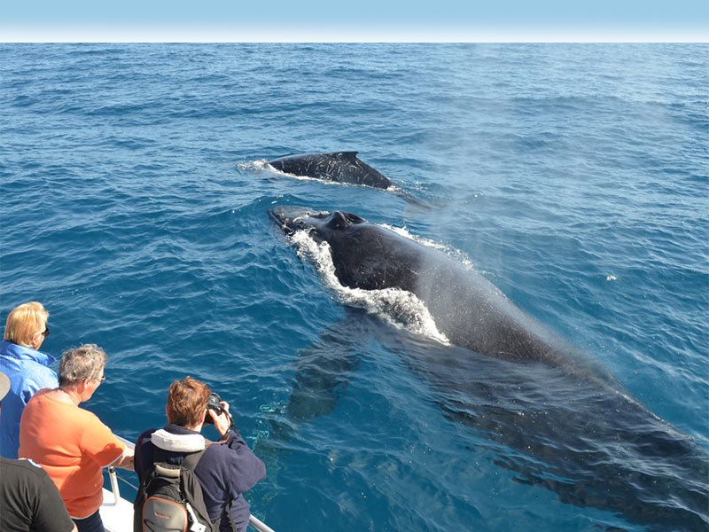 Boat Based and Land Based Whale Watching