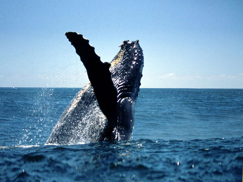 Magnificent Whale Displays near Cape Town
